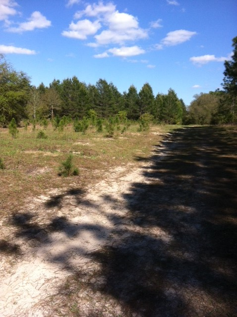 Florida Lakefront Acreage 117.5